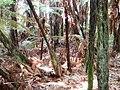 Fern bush in Nga Manu Nature Reserve.jpg
