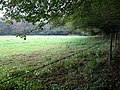 Field corner by Hurtwood - geograph.org.uk - 1504025.jpg