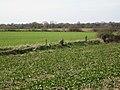 Fields south of Oldwich Lane - geograph.org.uk - 1803521.jpg
