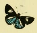 Fig 713 Plate 614 Zuträge zur Sammlung exotischer Schmetterlinge.png