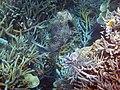 Fish 13 (30695463150).jpg