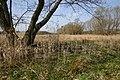 Flachmoor am Zickenbach mit Baum.JPG