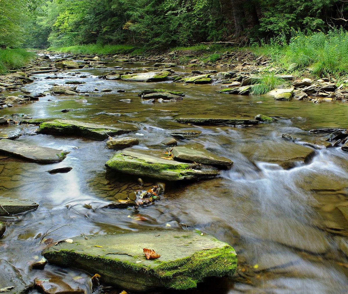 Battle Of The Kettles: Hammersley Fork