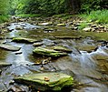Flickr - Nicholas T - Hammersley Fork (1).jpg
