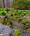 Flickr - Nicholas T - Spring-Fed Stream (1).jpg
