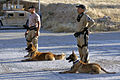 Flickr - The U.S. Army - Iraqi Police train working dogs in explosives and narcotics detection.jpg