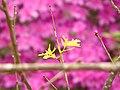 Flor 5 - CGLS.jpg