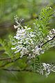 Flower, Name unknown... - Flickr - nekonomania (2).jpg