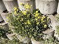 Flower.2386.JPG