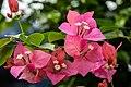 Flower (123888961).jpeg