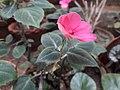 Flower 20180912 120650.jpg