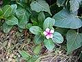 Flower in the Garden.jpg