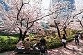Flower viewing event in Tokyo, Japan; April 2014 (09).jpg