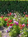 Flowers (9061040138).jpg