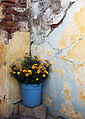 Flowers in a corner.jpg