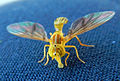 Fly-yellow-ecuador-snd.JPG