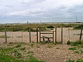 Footpath across the Shingle - geograph.org.uk - 445659.jpg