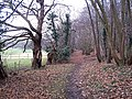 Footpath through Wardwell Wood - geograph.org.uk - 639175.jpg