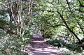 Footpath through Whiddon Valley Woods, Barnstaple - geograph.org.uk - 1482512.jpg
