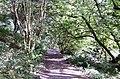 Footpath through Whiddon Valley Woods, Barnstaple - geograph.org.uk - 1482512.jpg
