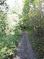 Footpath through the woods - geograph.org.uk - 1017519.jpg