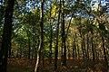 Forêt de Rambouillet — automne 2018 (3).jpg