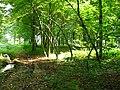Forêt de Tournehem - panoramio - Jean Marc Gfp (6).jpg