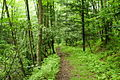 Forest-Trail-Seneca ForestWander.JPG