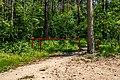 Forest in Minsk (June 2020) 7.jpg