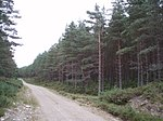 Forestry Road - geograph.org.uk - 215468.jpg