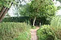 Fork in the path - geograph.org.uk - 1449792.jpg