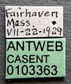 Formica impexa casent0103363 label 1.jpg