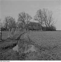 Fotothek df ps 0003935 Landschaften ^ Insellandschaften ^ Bauernhöfe.jpg