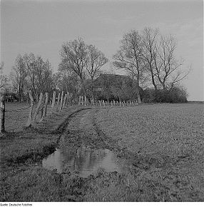 A 1963 photograph by Richard Peter of windbreak trees around rural buildings