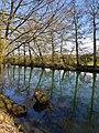 Fröndenberg-NaturschutzgebietObergrabenwestlichWickede-4-Asio.jpg