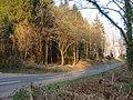 Fryth Wood beside the B4293 - geograph.org.uk - 1805070.jpg
