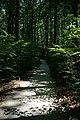 Fußweg Felsengarten Sanspareil 04082019 020.jpg