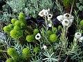 Fynbos plants.jpg