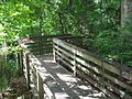 Gainesville FL Devil's Millhopper stairs03.jpg