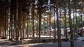 Garden of Pine - West of Omar Khayyam Tomb - Nishapur 17.JPG