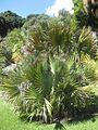 Gardenology.org-IMG 2114 hunt0903.jpg