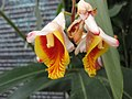 Gardenology.org-IMG 7555 qsbg11mar.jpg