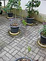Gardenology.org-IMG 7777 qsbg11mar.jpg