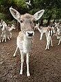 Gaziantep Zoo 1260124.jpg