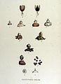 Geaster striatus — Flora Batava — Volume v15.jpg