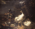 Geese and Ducks by Melchior d'Hondecoeter Mauritshuis 61.jpg