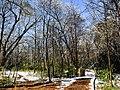 Georgia snow IMG 5033 (38911327542).jpg