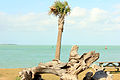 Gfp-florida-keys-key-west-tree-at-park.jpg