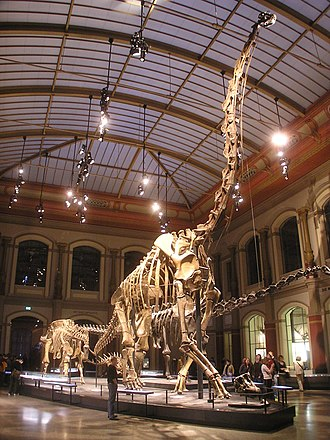Natural History Museum, Berlin - The Dinosaur Hall seen from the entrance, with the skeleton of Giraffatitan (formerly Brachiosaurus) brancai in the center
