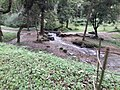 Godawari botanical garden 20180912 125709.jpg